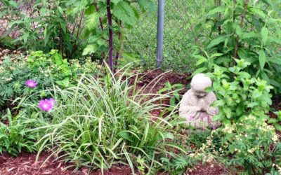Cultivating the stance of a Plant Spirit Medicine healer